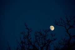 Moon.... (-Tripp-) Tags: city chicago outside illinois bedroom neighborhood northside chicagoland chicagoist