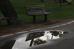 (  asaf pollak) Tags: park reflection water bench puddle israel yarkon yarkonpark         asafpollak