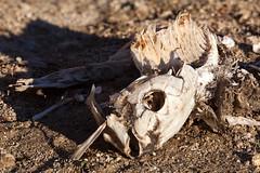 Carpe Diem (JsonR) Tags: chuck decomposition skeletalremains deadcarp chuck2 chuck3 chuck4 chuck6 chuck9 chuck5 chuck8 chuck10 chuck11