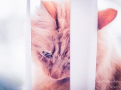 Sometime's I need a Little Time to Myself... (JoGo...) Tags: light blur cat ginger softness kitty