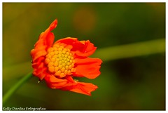 Pequenina (KELLY DANTAS) Tags: flowers brazil flores macro nature branco brasil natal photo foto ant natureza laranja flor bee abelha inseto pau rn formiga percevejo macrofotografia ecossistema ecovila