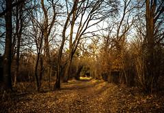 Parco WWF (Kazze) Tags: italy film 35mm lca italia lomolca wwf 2012 bosco pellicola