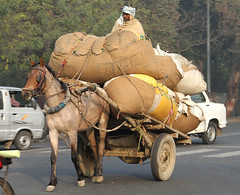 Moving Day (cowyeow) Tags: street city travel horse india strange car weird funny candid indian transport agra bags cart carry overload overloaded loaded uttarpradesh funnyindia