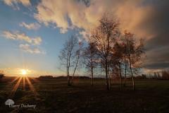 Comme une renaissance (photosenvrac) Tags: nature soleil photo ciel nuage paysage arbre contrejour sologne thierryduchamp
