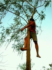 me and tree (adityafebriyanto) Tags: tree sonyericsson ricefield 5mp fruitman purworejo adityafebriyanto gadjahlontjat dukuhrejovillage