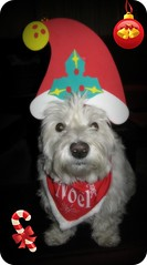 "12/12A ~ ""Tis The Season"" (ellenc995) Tags: christmas friends hat riley westie sensational westhighlandwhiteterrier 2012 ruby2 coth supershot akob abigfave citrit pet100 concordians thesuperbmasterpiece rubyphotographer 100commentgroup yearofholidays coth5 ruby10 12monthsfordogs12 thesunshinegroup sunrays5"
