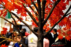 hanging smiles on a tree (dimitra_milaiou) Tags: world christmas xmas city winter light red people orange woman man tree fall love me colors smile leaves lines shop shopping greek lights design leaf nice nikon europe december colours shadows time market you bokeh many d branches centre crowd joy decoration hellas athens celebration greece together avenue decor celebra