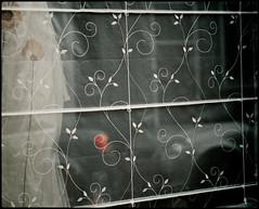 Tulipan (Daniel Hernanz Ramos) Tags: madrid street holland amsterdam bike nederland thenetherlands boten bici holanda nl kanaal rijksmuseum bloemen meisje damplein molen amstel fiets tulpen eenden westerkerk jongen kaas paisesbajos nightpictures urbanpictures streetpictures artisticpictures danihernanz amsterdamstreet animalspictures moodpictures amsterdampictures beautifulholland beautifulamsterdam amsterdamphotos danielhernanzfotografodemadrid animalsphoto mountainspictures ambientpictures artisticpicturesofamsterdam picturessofamsterdam bikesnl eenjongendiezittefietsen pandgrachten lasmejoresfotosdemadrid artisticanimalpictures copyrightdanihernanz fotosartsticasdemadrid fotosdemadridenblancoynegro blackandwhiteurbanpictures amazingurbanpictures fotografodeanimalsdanihernanz amazinganimalpictures agressiveanimalpictures animaldetailpictures animalsfacetoface closeupanimalpictures thebestpicturesofanimals beautifullandscapespictures ambiancepictures pictureswithatmosphere artisticstreetpictures artisticurbanpictures artisticstreetcomposition cityambientpictures