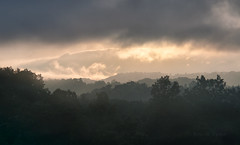 Clearing storm (Thankful!) Tags: mountains westvirginia storm backlit silhouette forest steam mist fog