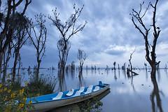 Naivasha Lake (magomu) Tags: lago lake naivasha kenia kenya
