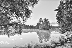 tang du Zich, Molsheim,France. (boomer_phil) Tags: bw eau etang reflets arbres trees water brumes fog nikon d500 pcheurs fishermen