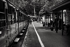 Back to history (saahmadbulbul) Tags: australia belgrave puffingbully train history blackwhite