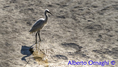 Acquatic bird. (Alberto04) Tags: ucello bird acqua water italia italy europa europe canoneos700d photomatix hdr flickr foto