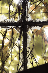 Beauty in Brokenness (Nate Conn) Tags: religious cross broken glass abandoned building crown thorns vines christian catholic symbolism black white brown green light wide aperture shallow depth field focus f17