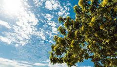 Springtime (obLiterated) Tags: home flowers runcorn sky tree spring
