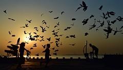 Let my spirit fly (Sanjiban2011) Tags: doha qatar pigeons morning sunrise silhouette flyingbird flying freedom nature outdoor nikon d750 fullframe fx nikon24120 corniche