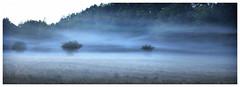 """Ghost Bush"" (na_photographs) Tags: fog nebel bodennebel dunst mist nature magic geheimnisvoll ghostly spooky gespenstisch"