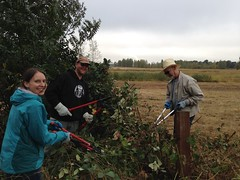 NPLD 2016 at West Eugene Wetlands Stewart Pond (BLMOregon) Tags: npld16 nationalpubliclandsday oregon invasive weeds volunteerism blm bureauoflandmanagement