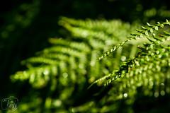 Blatt_018.jpg (greiner_max) Tags: plants leave switzerland object places kzo klassenausflug gadmen gymnasium destinations flora genre kanti objekt ortschaften pflanzen schweiz bern ch