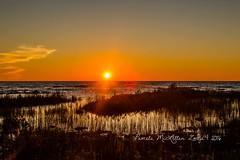 20160828-IMG_7764-WM (Pamela McLellan Zmija) Tags: pamelamclellanzmija saugeenshores portelgin sunset beach lakehuron goblesgrove sunshine
