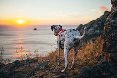 Risky (Leo Hidalgo (@yompyz)) Tags: canon eos 6d dslr reflex yompyz ileohidalgo fotografía photography vsco fisterra cabo finisterre galicia españa spain travel roadtrip dog perro animal dalmatian dálmata