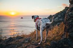 Risky (Leo Hidalgo (@yompyz)) Tags: canon eos 6d dslr reflex yompyz ileohidalgo fotografa photography vsco fisterra cabo finisterre galicia espaa spain travel roadtrip dog perro animal dalmatian dlmata