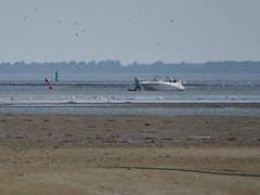 In the gully to Schiermonnikoog harbour, the dog goes first (Alta alatis patent) Tags: schiermonnikoog harbour dog raceboat shallow gully
