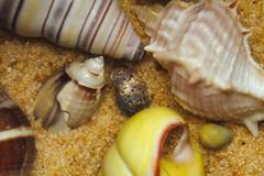 Sand & Shells- HMM