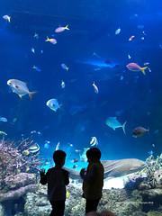 Sydney (photocracy) Tags: australia sydneyaquarium greatbarrierreef sydney