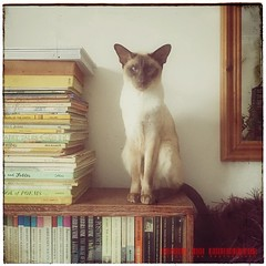 Milo the Inscrutable (Viveca Koh FRPS) Tags: iphoneography instagram iphone mirror bookshelf books siamesecat siamese cat reflection