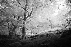 Padley Gorge 24/09/2016 (Matthew Dartford) Tags: peak district peaks woods forest ir infrared