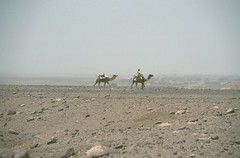 On the way to Bardai (michael_jeddah) Tags: sahara desert chad camel camels tubu tibesti tibbu
