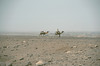 On the way to Bardai (michael_jeddah) Tags: sahara desert chad camel camels tubu tibesti tibbu