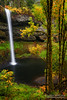 Vertical Bliss (Aaron Reed Photography) Tags: autumn fern green fall water oregon photography golden waterfall moss fallcolor photographyclass photographers stockphotos silverfalls silverfallsstatepark stockimages professionalphotography blackwhitephotography southfalls photographyschool fineartphotographs skyphotographs lakephotographs aaronreed naturephotographs abstractphotographs landscapephotographs photographytraining framedartprints sunsetphotographs artphotographs sunrisephotographs aaronreedphotography oregonphotography surrealphotographs oregonlandscapephotography redphotographs waterphotographs cityscapephotographs cloudsphotographs duskphotographs reflectionphotographs exposurenorthwest bluephotographs aaronreedphotographer landscapephotographygallery mountainsphotographs orangephotographs pavementphotographs whatislandscapephotography whatisstockphotography aaronreedart aaronreedprints aaronreednature aaronreedaluminumartprints yellowphotographs bridgephotographs buildingsphotographs twilightphotographs roadphotographs aaronreedmetalprints aaronreedacrylicfacemountprints