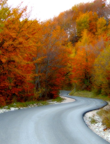 La strada... (rospex) alberi strada autunno colori