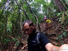 jungleguide