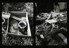 (bildministeriet) Tags: bw film broken 35mm lost diy diptych decay rescanned olympuspenees halfformatcamera