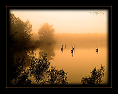 'On Golden Pond!' (ODC - Wave) (VanGoffy) Tags: morning light mist lake water fog forest pond woods mood wave panasonic odc goffy atmophere vangoffy