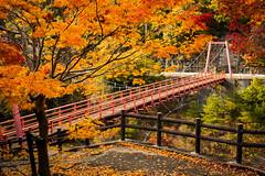 PhoTones Works #2143 (TAKUMA KIMURA) Tags: bridge autumn nature leaves japan river maple scenery scene     autumnal  omd kimura     takuma   em5 photones