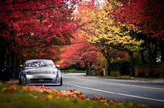 IMG_9546-Edit (Jesus Calles Photography) Tags: fall leaves october slammed stance streetsweeper oem fitted airride weds 305z kranze jcphoto cakefaceclothing