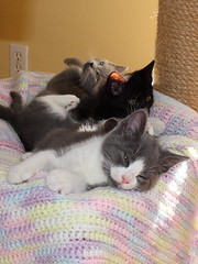 Time to Wind Down (Charles Huss) Tags: cats kittens