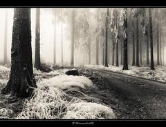 foggy frosty forest (bernd obervossbeck) Tags: winter forest landscape path hoarfrost landschaft wald weg sauerland whitefrost landscapephotography rauhreif hochsauerland landschaftsfotografie jagdhaus mygearandme mygearandmepremium mygearandmebronze mygearandmesilver mygearandmegold mygearandmeplatinum lumixlx5