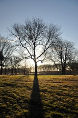tree (christiaan_25) Tags: morning november blue shadow sky sun cold tree green sunshine silhouette project glow bright sunny explore photoaday flare 87 mortonarboretum treesdiestandingup fmsphotoaday nov272012