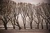 Lake Ontario - Winter (A Great Capture) Tags: trees winter lake snow toronto ontario canada ice beach lakeontario 2009 westend on lhiver ald ash2276 ashleyduffus feb7th2009 ashleylduffus wwwashleysphotoscom