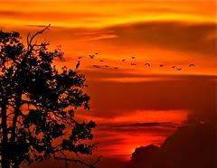 Peponi VII (Paradise) (Anna Kwa) Tags: sunset nature birds paradise johor muar westmalaysia treecrane