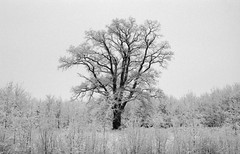 the tree in winter (Jos Mecklenfeld) Tags: bw film netherlands forest 35mm landscape fuji minolta ishootfilm fujifilm dynax 700si groningen bos terapel westerwolde minolta700si minoltadynax700si minoltaaf28f28 epsonv500