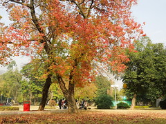 Colors of Autumn in Islamabad (Shiraz_Hassan) Tags: autumn trees pakistan sky plants color tree green colors beautiful zoo space islamabad