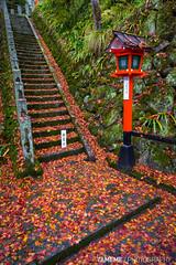 All Red / Kyoto, Japan (yameme) Tags: travel japan canon eos maple kyoto   kansai    kurama  kuramadera  24105mmlis 5d3 5dmarkiii