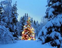 Christmas is coming ..... (Luigi Strano) Tags: christmas natale      christmas2012 natale2012