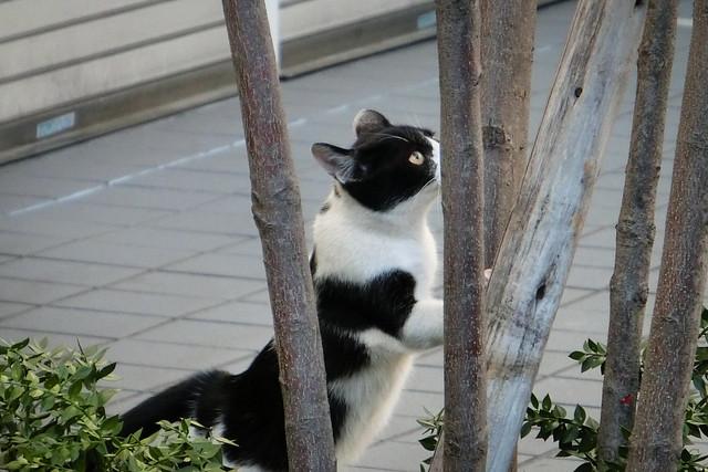 Today's Cat@2012-12-13